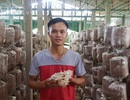 Chán lương công nhân, 9X về trồng nấm, kiếm 30 triệu/tháng