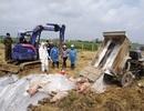 10 tháng, cả nước mất gần 6 triệu con lợn vì dịch tả châu Phi