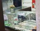 Giám định tâm thần nghi phạm đánh gục chủ tiệm vàng để cướp