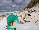 Ô nhiễm nhựa giết chết nửa triệu con ốc mượn hồn