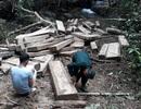 """Núp bóng lấy gỗ làm nhà, lâm tặc mở """"công trường"""" khai thác gỗ tại Kon Tum!"""