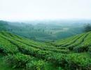 Vai trò của chương trình chỉ dẫn du lịch dành cho Việt kiều và du khách nước ngoài