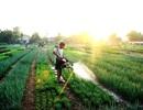 Hội An khai trương điểm tham quan làng rau hơn 400 tuổi vào đầu năm mới
