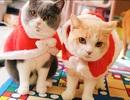 Chủ nhân rút hầu bao, chi đậm sắm đồ Noel cho thú cưng