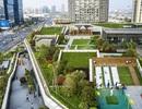 Sửng sốt với khu đô thị xanh, trồng cả vườn cây trên mái nhà ở Trung Quốc