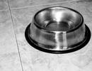 Chồng đi tù vì bắt vợ ăn đồ trong bát của chó
