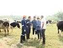 Sữa Cô gái Hà Lan tự hào có nguồn sữa nguyên liệu lớn và an toàn hơn chuẩn 11 lần