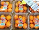 Quất Nhật 2 triệu đồng/kg: Dân Việt mua làm mứt Tết đãi khách
