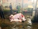 Bắt quả tang nhiều cơ sở bơm nước vào bò trước khi giết mổ