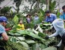 Hà Tĩnh: Thủ phủ lá dong Đức Thọ hối hả vào vụ Tết