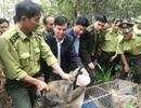 Giải cứu 12 cá thể cầy suýt lên bàn nhậu