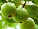 Ăn loại quả này vào buổi sáng giúp hạ đường huyết