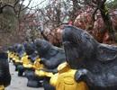Độc đáo chuột vàng cõng hoa đào mừng xuân Canh Tý