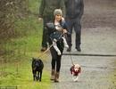 Vợ Hoàng tử Harry tay xách nách mang khi đưa con đi dạo