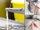 Sợi được nuôi cấy từ tế bào da người có thể được dùng để ghép mô