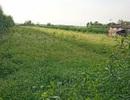TPHCM đề nghị chuyển hơn 300ha đất nông nghiệp thành khu đô thị sinh thái
