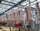 Bộ Nông nghiệp làm gì để kéo giảm giá thịt lợn?