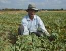 """""""Né"""" hạn mặn trong mùa khô, dân trồng cây phù hợp cho thu nhập cao"""