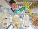 Bayer thúc đẩy nông nghiệp sáng tạo và bền vững bằng đầu tư công nghệ