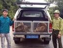 Thả về rừng nhiều động vật quý hiếm do người dân giao nộp