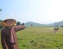Tạm dừng triển khai dự án lò mổ heo nằm gần chùa cổ ở Quảng Bình