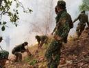 """""""Bà hỏa"""" hoành hành suốt một ngày, 6ha rừng bị thiêu rụi"""