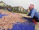 Trúng mẻ ruốc biển, ngư dân kiếm cả chục triệu đồng mỗi ngày