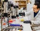 Phát hiện các loài vi khuẩn mới chống biến đổi khí hậu