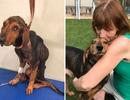"""Nhận nuôi chú chó """"da bọc xương"""", người phụ nữ được đền đáp bằng...sự sống"""