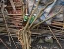 2 người tử vong sau khi uống rượu ngâm rễ cây rừng