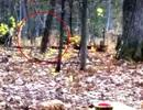 Cựu lính thuỷ đánh bộ Mỹ chạm trán quái vật chân to Bigfoot