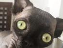 """Lạ mắt với cô """"mèo dơi"""" khiến cư dân mạng phát cuồng"""