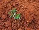 Đất có thể hấp thụ 5,5 tỷ tấn carbon dioxide hàng năm