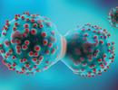 """Tế bào ung thư """"mượn"""" thành phần của tế bào thường để khó bị tiêu diệt hơn"""