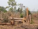 Khởi tố 3 vụ phá rừng trên khu vực biên giới