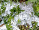 Liên tiếp xảy ra giông lốc, mưa đá, Thanh Hóa hỏa tốc ứng phó