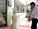 ĐH Công nghệ chế tạo robot nhắc đeo khẩu trang chống dịch Covid-19