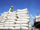 Gạo đầy kho, DN và các tỉnh đề xuất cho xuất khẩu trở lại
