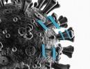MIT phát triển hợp chất có thể ngăn chặn Covid-19