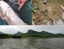 Vụ hàng tấn cá chết trên sông: Phát hiện nhiều cơ sở xả thải xuống sông