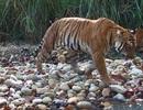 Thủ tướng chỉ đạo ngăn chặn nạn săn bắt động vật hoang dã