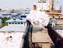 Hải quan hủy 53.300 tấn gạo xuất khẩu do doanh nghiệp khai khống