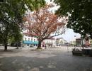 Nắng vàng thênh thang trên đường phố Hà Nội vắng bóng người