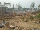 Kiểm điểm chủ rừng để cháy 17ha rừng trồng mà chậm báo cáo