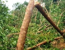 Gió lốc làm đổ cây rừng, đè chết một người ngủ trong lán