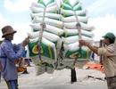 """Trung Quốc mua gạo Việt giá cao kỷ lục; 321 triệu khẩu trang """"xuất ngoại"""""""