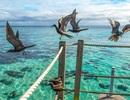 Các loài chim biển tìm thức ăn trên biển như thế nào?