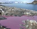 Bí ẩn ao nước màu tím ở Nam Cực