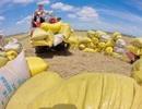 Hạn ngạch xuất khẩu gạo: Đừng đánh mất cơ hội thu lợi nhuận tốt cho nông sản