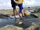 Canh con nước rút, ra biển cào sò chơi chơi cũng có nửa triệu đồng/ngày